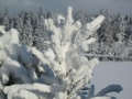 zima2008_011